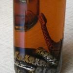 生き物を漬け込んだお酒(1)