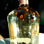 生き物を漬け込んだお酒(2)
